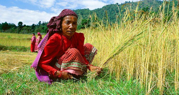 Annapurna-people